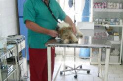 DR. BOCHIS ALIN – Cabinet veterinar Baia Mare – CHIRURGIE, ANALIZE LABORATOR, ECOGRAFIE, ORTOPEDIE