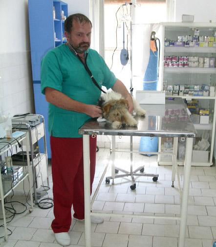DR. BOCHIS ALIN - Cabinet veterinar Baia Mare - CHIRURGIE, ANALIZE LABORATOR, ECOGRAFIE, ORTOPEDIE
