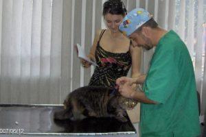 Vaccinari pisici si caini