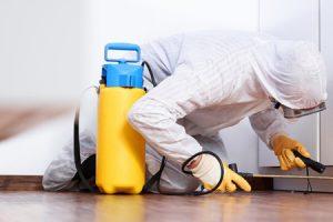 deratizare-dezinfectie-dezinsectie-5-600x300px