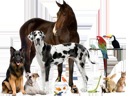 cabinet-veterinar-apahida