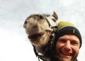 Asistenta veterinara animale de renta (cai)