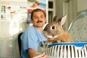 Consultatii animale de companie Cluj-Napoca
