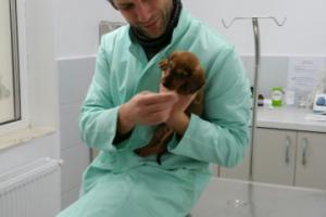 Consultatii veterinare Tashi Vet