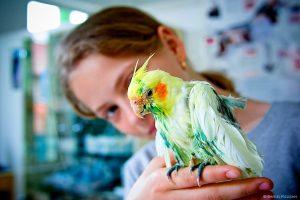Tratamente si consultatii pentru orice animal de companie Cluj